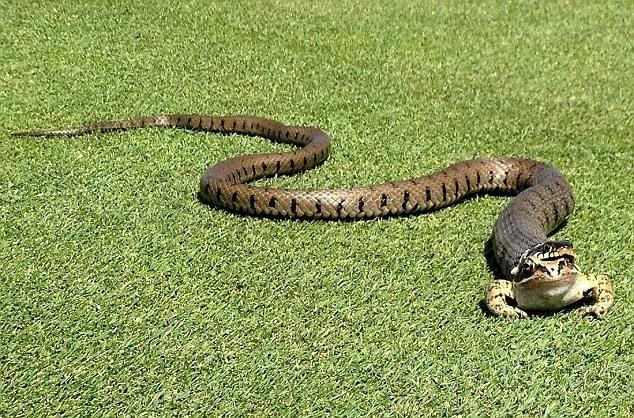 Mơ thấy rắn có ý nghĩa như thế nào