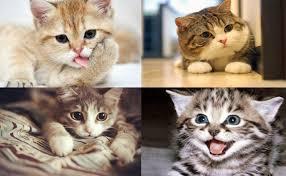 Mơ thấy mèo điềm báo điều gì