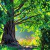 Mơ thấy cây cổ thụ liên quan đến con số nào?
