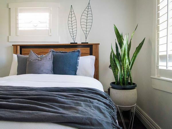 Cây phong thủy cho phòng ngủ